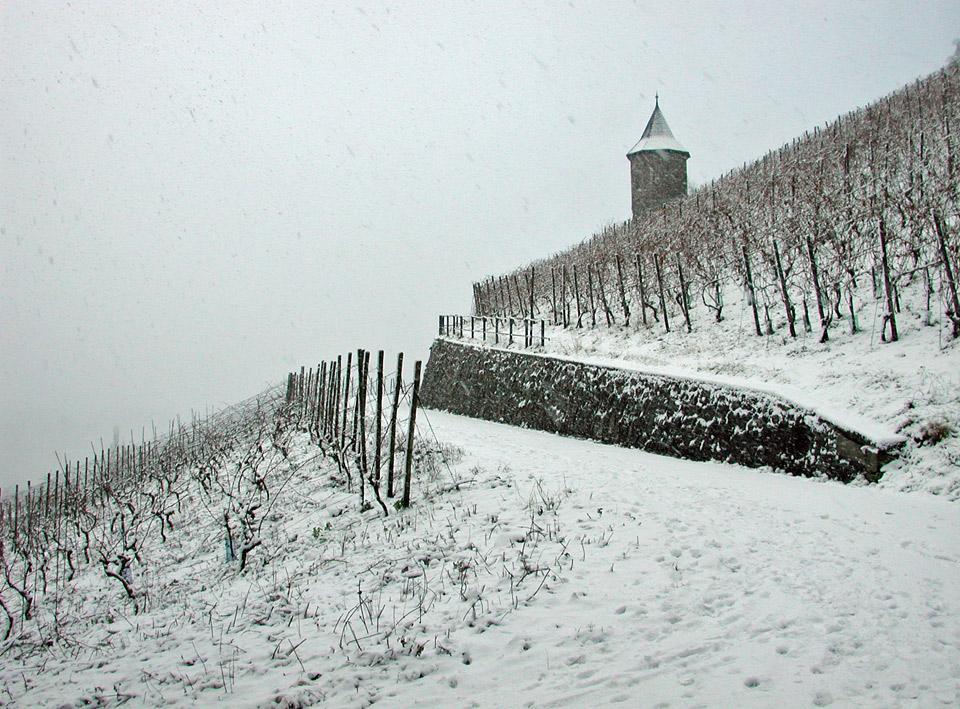 Weinberg und Weinbergstürmchen vom Weingut Broel im Schnee