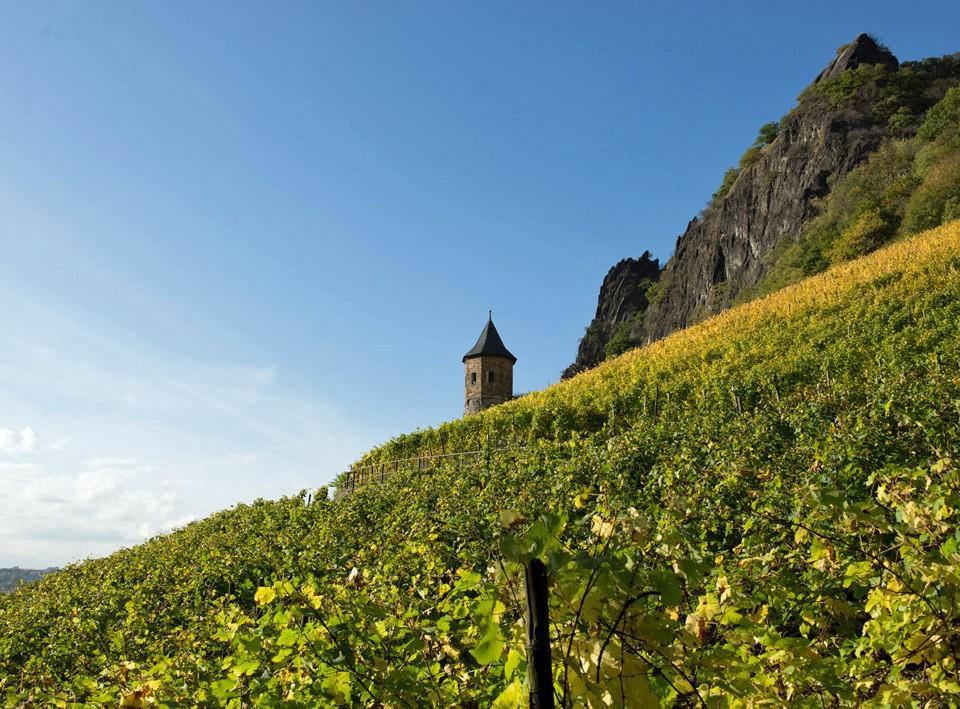 Weinberg mit Weinbergstürmchen; Weingut Broel